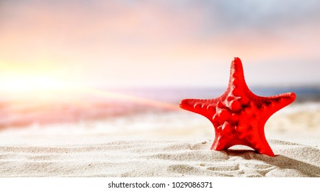 Shell on sand with ocean landscape at sunset time. Free space for your decoration of product or text.