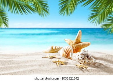 Shell on sand and summer time