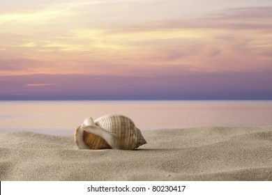 shell on the sand at sunset