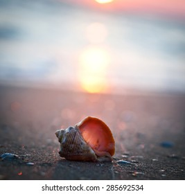 shell on sunset