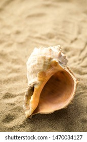 Shell on tropical beach, background