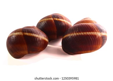 shell on a white background, helix pomatia also Roman snail, Burgundy snail, edible snail or escargot, a terrestrial pulmonate gastropod mollusk in the family Helicidae