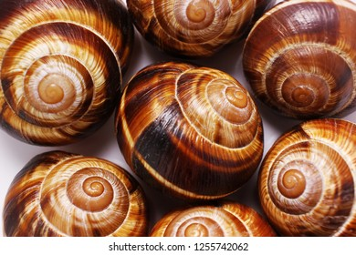 shell on a white background, helix pomatia also Roman snail, Burgundy snail, edible snail or escargot, is a species of large, edible,  a terrestrial pulmonate gastropod mollusk in the family Helicidae