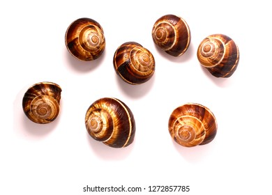 shell on a white background, helix pomatia , Burgundy snail, edible snail or escargot, is a species of large, edible,  a terrestrial pulmonate gastropod mollusk in the family Helicidae