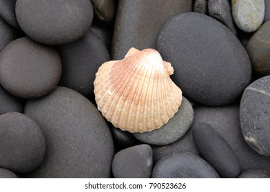 shell with pebbles on wet beach