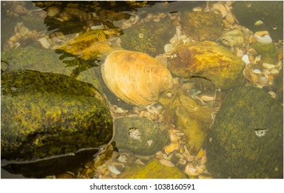 Shell, Rocks and water