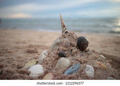 shell and sand on beach