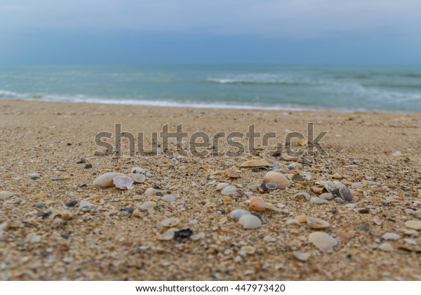 shell and sand on beach with waving sea in background