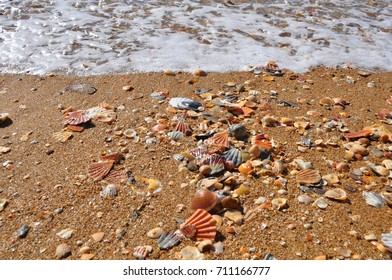 shell, sand, seashell