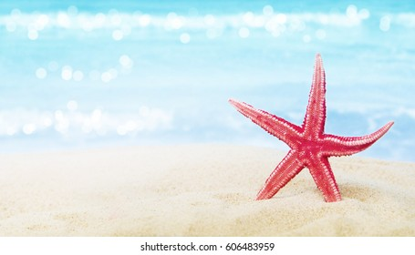 Shell Sea Star.Summer background.