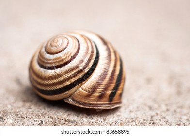 Shell of a snail