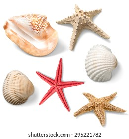 Shell, Starfish, Clam.