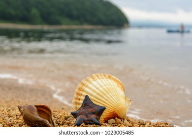 shell, starfish and crab on the sand. Background
