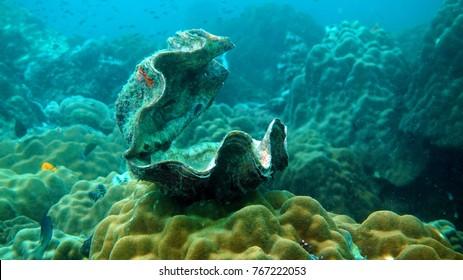 Shell underwater. Diving. Underwater life high resolution