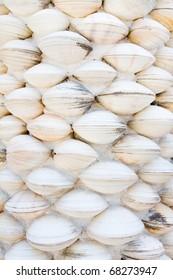 Shell wall