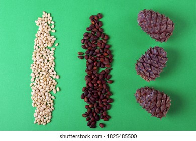 Shelled and unshelled pine nuts and pine cones in rows against the green background. Processing the nuts in stages