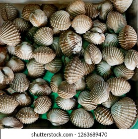 Shellfish, clams ready for sale on the market in Ban Phe, Thailand
