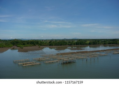 Shellfish farming in open sea, ecosystem approach by making shelter for shellfish, asain traditional wooden pier for shellfish reproduce or breed, sky trees and sea scenic.