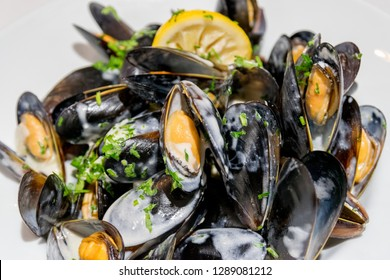 Shellfish Mussels in white sauce. Shellfish seafood. Close up and selective focus.