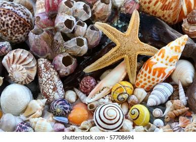 Shellfish on the Beach