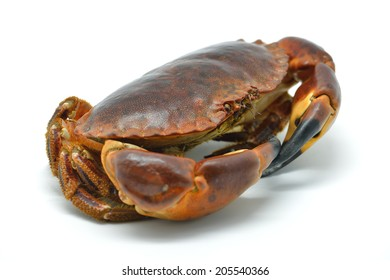 Shellfish: raw crab isolated in white