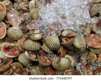 Shellfish sea food