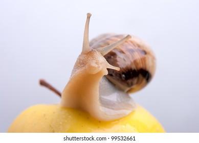 Shellfish, snail by CU on a background