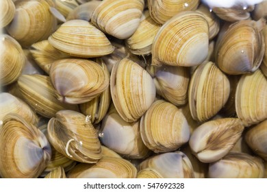 Shellfish such as clams are delicious but allergic to some people