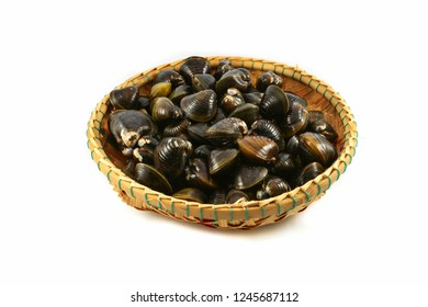 Shellfish such as clams isolated / Freshwater shell bivalve on basket and on white background