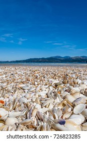 shells at abel tasman national park new zealand