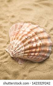 Shells by beach, holidays background