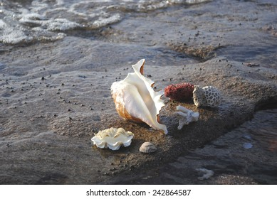 shells and corral on the beach