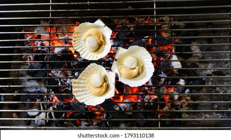 Shells are grilled on a charcoal grill dinner outdoors. Shells are burned on the grill. Shells cooking grilling on flaming grill steamed.