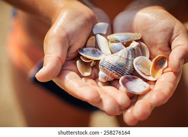 shells in the hand of a child