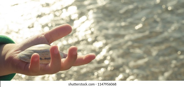shells in the hands of child