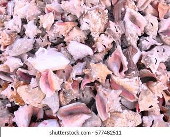 Shells in Nassau, Bahamas