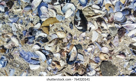 Shells on beach, Cape Town, South Africa