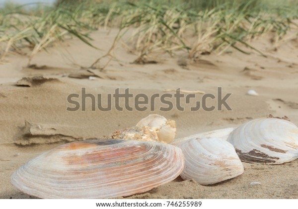 Shells on the Beach - Collection of shells on the beach