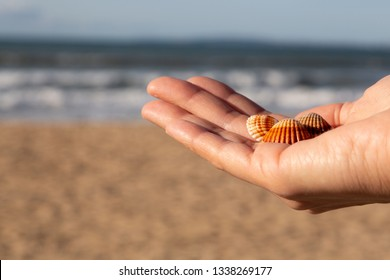 Shells on the beach. Seashells in woman's hand. Collecting empty shells, taking shells from the beach concept.