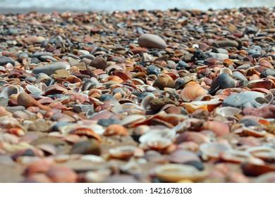 shells on a beach in Spain