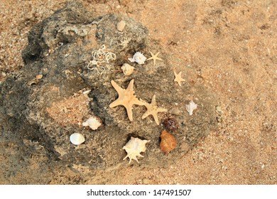 Shells on the beach/Marine decoration for design