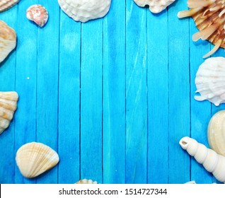 Shells on blue wooden background.Summer and Sea Concept.