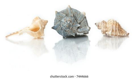 shells on isolated white background