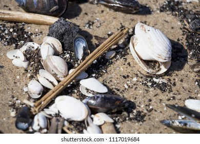 Shells on the sand. Coast