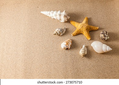 Shells on the sand with a low lighting