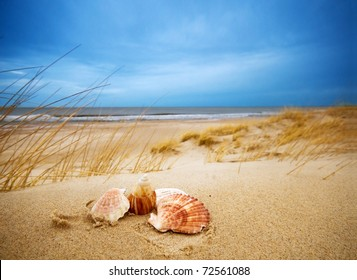Shells on sand. Ocean in the background
