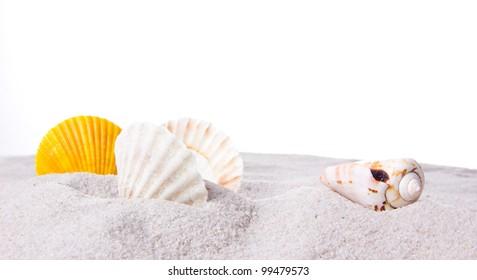 shells on sand over white