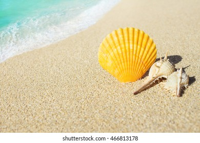 Shells on the sandy beach with blue ocean wave on background