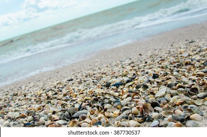 Shells on the seaside