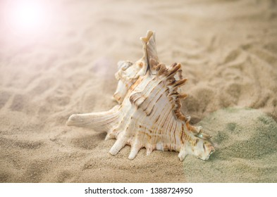 Shells on tropical beach, background